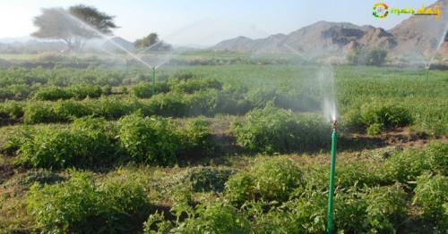 Old Omani ways help modern agriculture