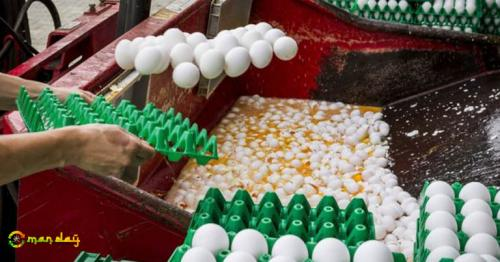 Suspect eggs have been destroyed at farms in the Netherlands
