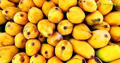 Mango war