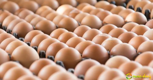 UAE bans eggs, meat products from Russia