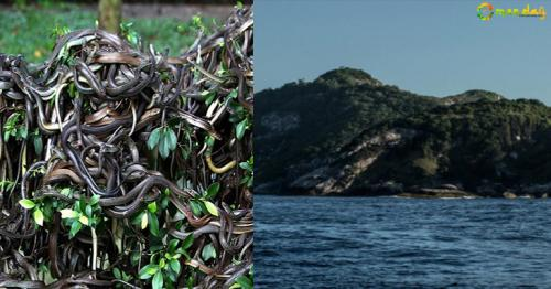 Snake Island – An island with 2 million snakes and zero human population