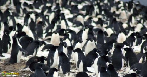 Hidden From The World Until Now, A Supercolony Of 1.5 Million Penguins Discovered In Antarctica