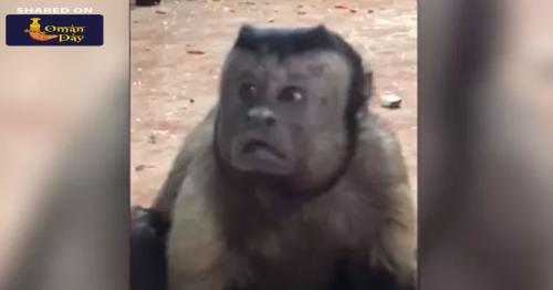 "Video: This Monkey With A ""Human Face"" Is Freaking The Internet Out"