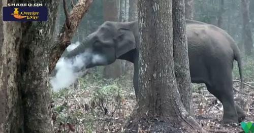 Watch: Karnataka Elephant Filmed 'Smoking'. What It Was Actually Doing