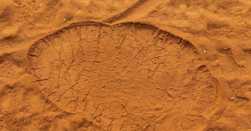 Primitive elephant footprints excavated in Oman