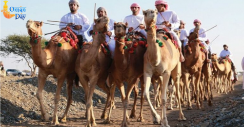Travel Oman: Camel racing, an integral part of Oman's tradition