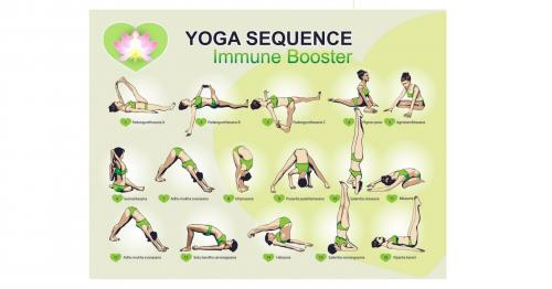 Support Your Immune System: Yoga for Wellness