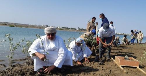 Mangrove seedlings planted in Oman