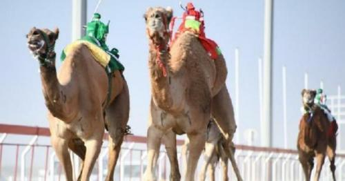 Oman's camel races finds place in UNESCO Representative List