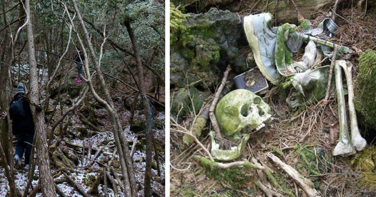 15 Things About Japan's Suicide Forest That Will Terrify You