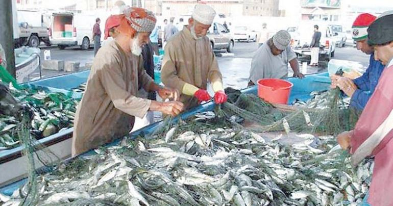 Increase in the landed prices of seasonal fish species, Oman Fisheries, latest Oman fisheries news, Latest Oman news, Oman business news