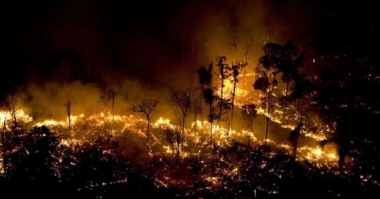 WildFire in Amazon, latest amazon fire news,  International news, Amazon wildfire