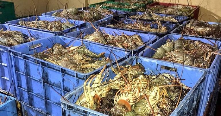 Over 3,000 kilos of fish seized in Oman